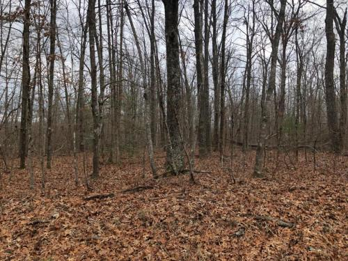 1236 Natchez Trace Photo 1