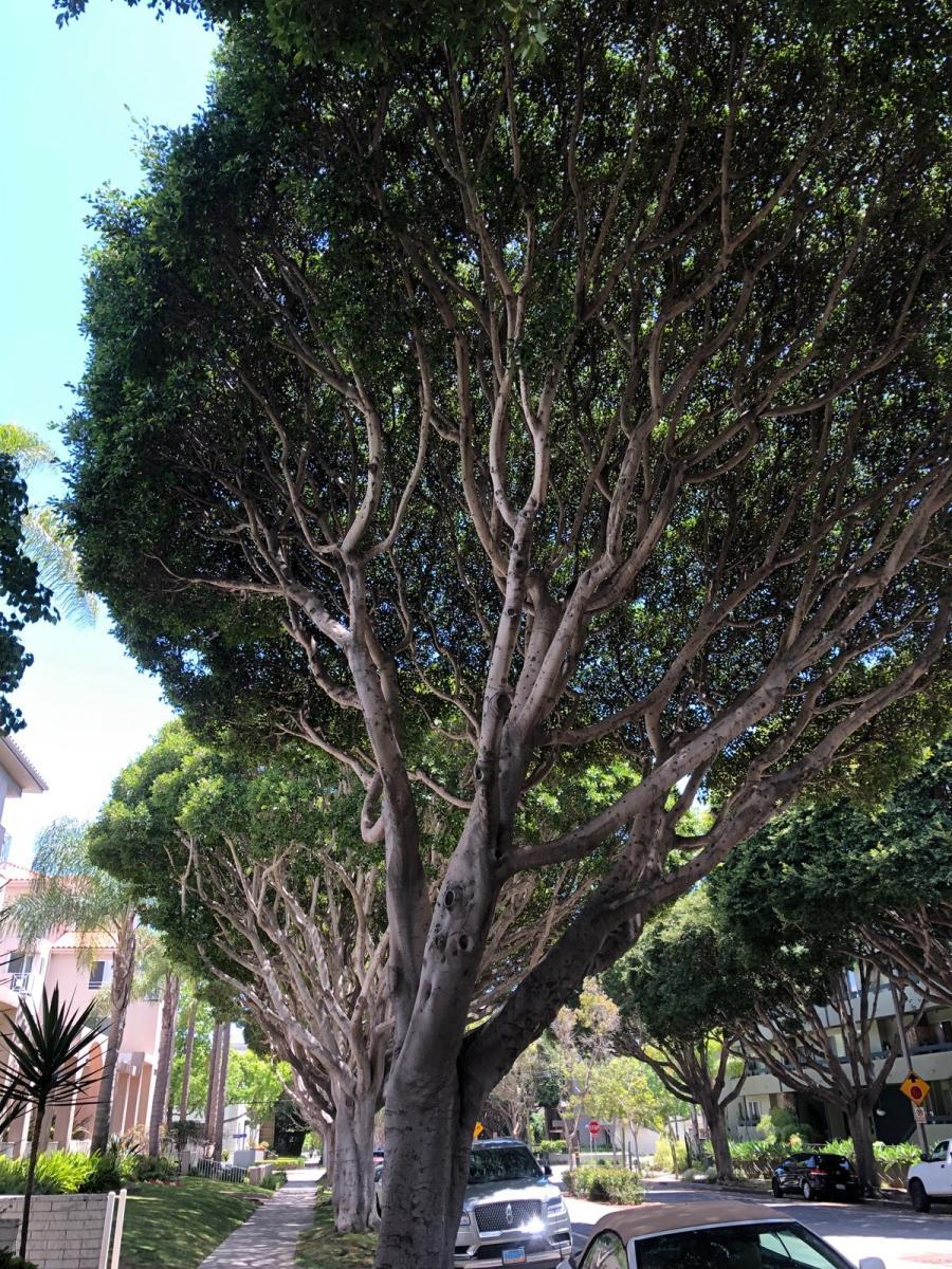 831 2nd Street Apt 15, Santa Monica, CA 90403 | HotPads