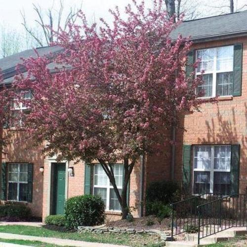 Beautiful townhomes available now at the Village at England Run! Photo 1