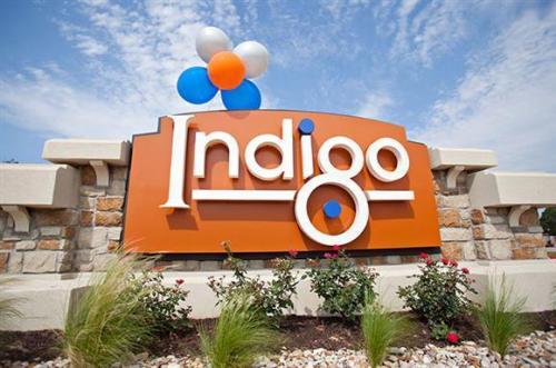 Indigo Photo 1