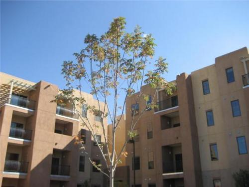 Tres Santos de Santa Fe Apartments Photo 1