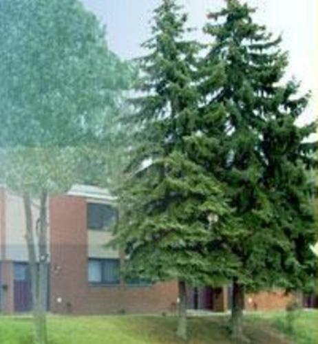 Mountainview Apartments Photo 1