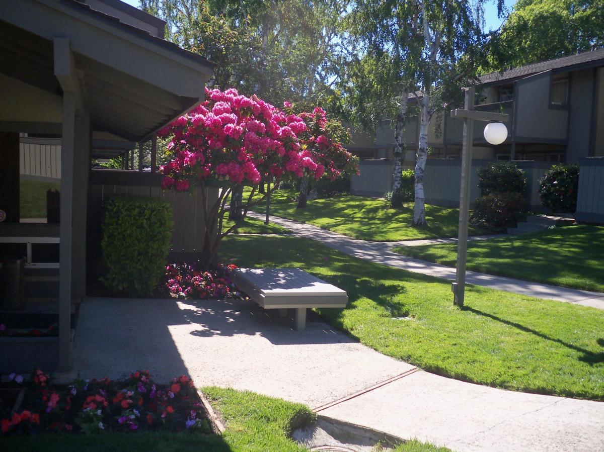 1229 Vicente Drive Sunnyvale Ca 94086 Hotpads