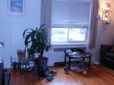 Large 1bd on a quiet street in Brighton availab... 1 Photo 1