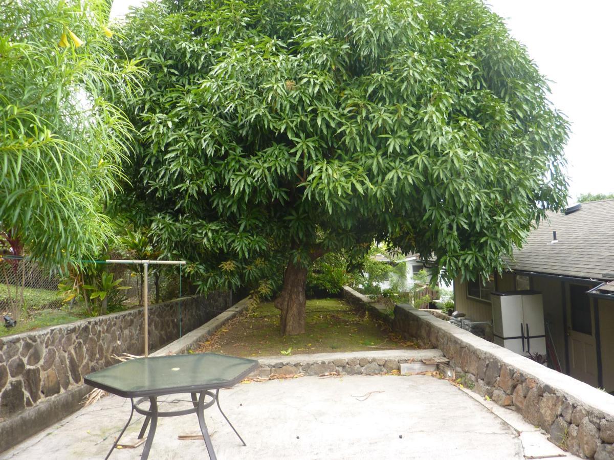 1355 Akiahala Street Apt B, Kailua, HI 96734 | HotPads
