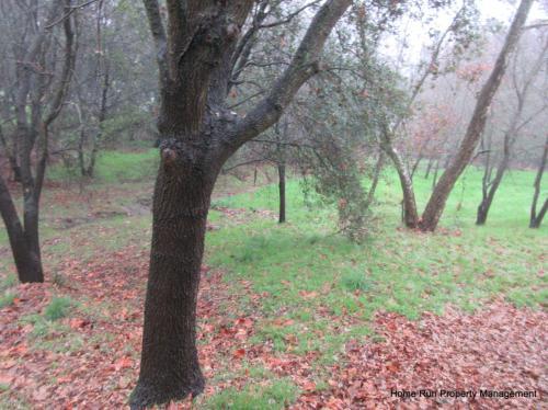 6644 Oak Branch Way Photo 1