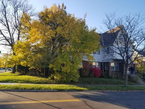 Cedar Road Photo 1