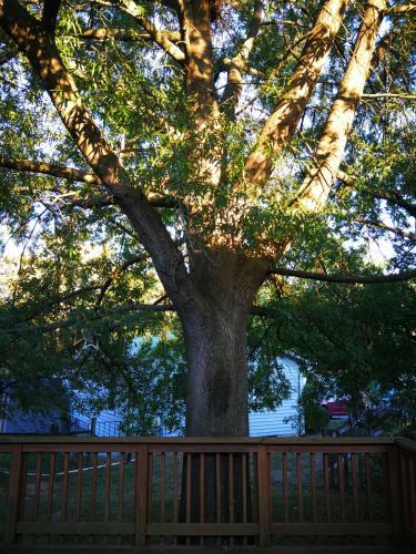 117 Oak View Drive SE Photo 1