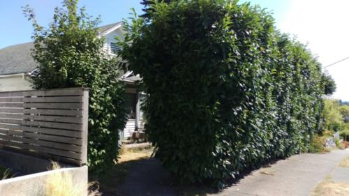 1028 E Shelby Street Photo 1